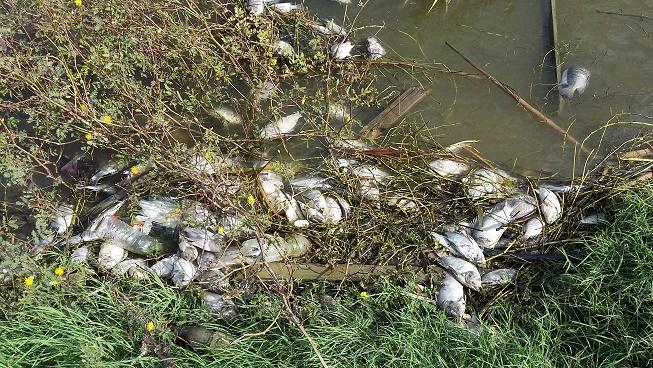 Peces muertos en Lago El Cisne, es consecuencia de pesca artesanal: C.R.A.