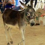 120 pieles de asno incautadas por la Fiscalía en Barranquilla
