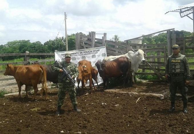 El Ejército de Colombia y la Policía Nacional, recuperaron semovientes hurtados en Codazzi, Cesar