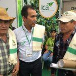 ICA ineficiente: Desde el 2009 Colombia estaba sin aftosa, hoy un foco de esta fiebre aparece en Arauca