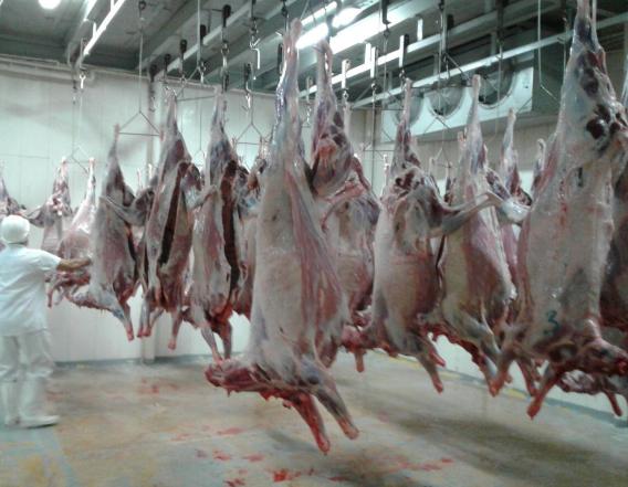 Empresa ovinocaprina vallenata inició ventas de carne en canal al mercado nacional