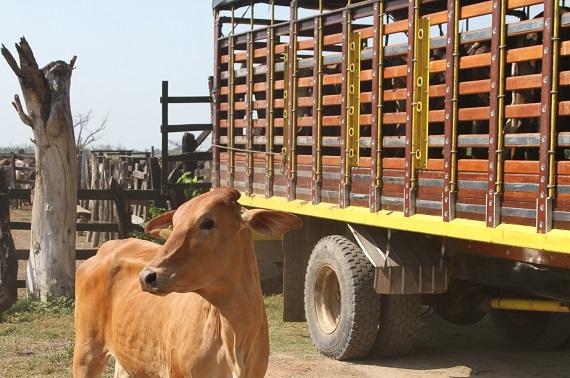 Refuerzan las medidas sanitarias a expendios de carnes en Atlántico