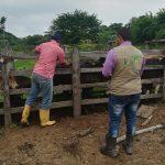 ICA afirma que ejerce control de sanidad animal en La Guajira