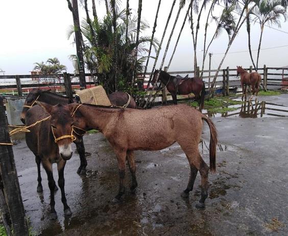 Se levantan restricciones a la movilización de equinos en el Magdalena