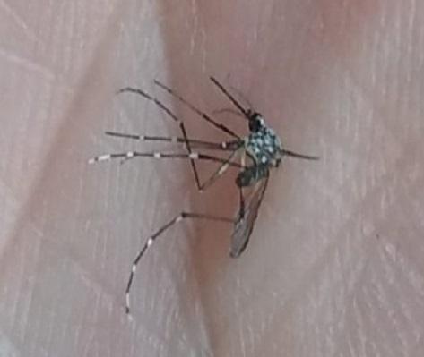¡Ojo con el dengue!. Estamos a tiempo de frenar la aparición de nuevos casos