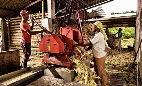 El sector panelero colombiano se reunirá hasta el 25 de noviembre en ExpoPanela 2016