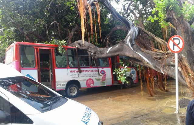 Aguaceros de Barranquilla: Arroyos arrastran 2 vehículos. Árbol cae sobre un bus