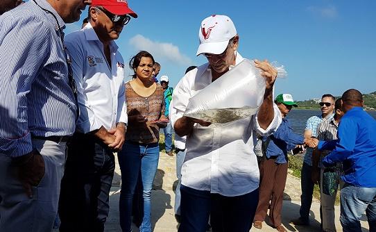 60 mil alevinos de bocachico fueron sembrados en el Lago del Cisne, en Barranquilla