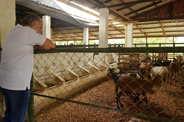 presentacion-propuesta-de-ovinos-zona-rural-de-sabanalarga-7