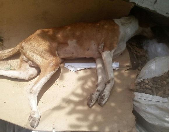 cartagena-perro-lomador-3