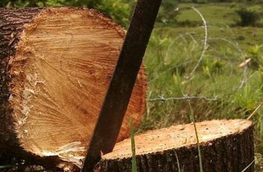 talaban-madera