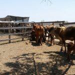 Ideam asegura que el Fenómeno de El Niño versión 2019 ya finalizó