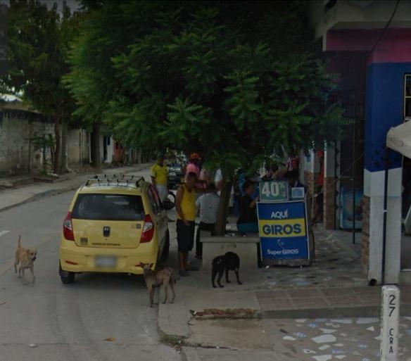 perros-en-la-calle