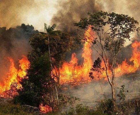 Llamado urgente a los gobiernos ante incendio de la Amazonía, Pulmón del Mundo. También hay ruegos por el Amazonas