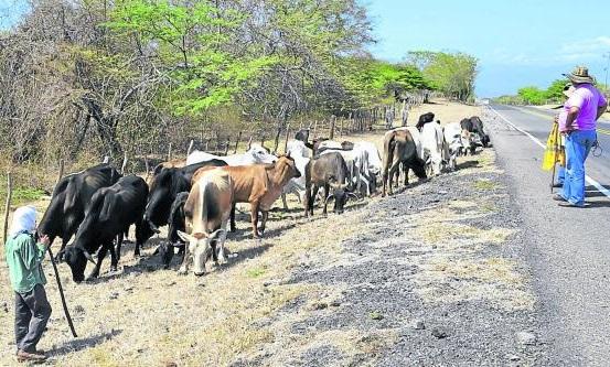 Alternativas Productivas en el Cambio Climático y Desarrollo Rural. Por: Miguel Ángel Lacouture