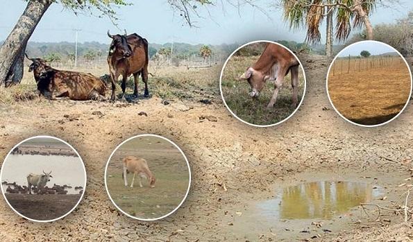 Ganaderos en alerta: altas temperaturas e incendios forestales afectan el agua y la comida del ganado