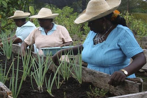 Empoderamiento de la Mujer Rural y el Desarrollo Rural. Por: Miguel Ángel Lacouture