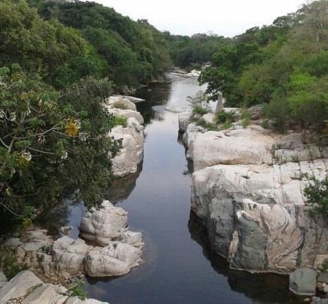 Retornar a la Protección del Bosque Seco Tropical Colombiano para ser más productivos. Por: Miguel Ángel Lacouture