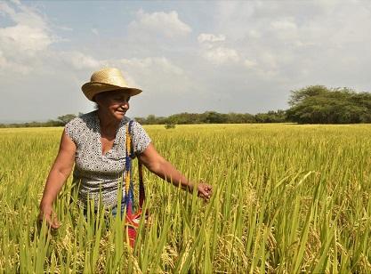 Reactivar la económica el día después de la pandemia, con $8.000 millones entre más de 700 agricultores en producción, busca Elsa Noguera con apoyo del Ministerio de Agricultura