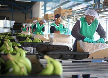 3.900 mercados y más de 160 toneladas de fruta han sido entregados en la zona norte del país