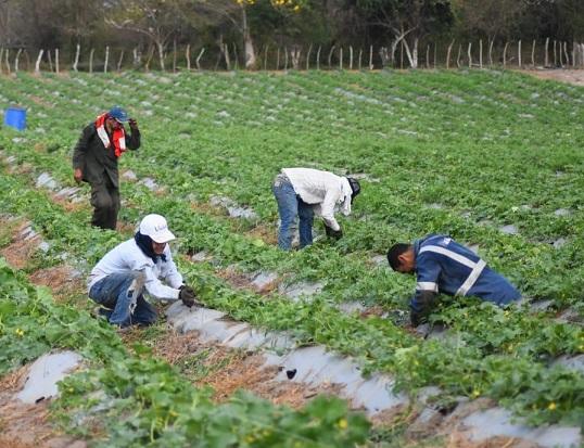 Elsa Noguera invita a alcaldes y a productores rurales a postularse al programa de kits de siembra
