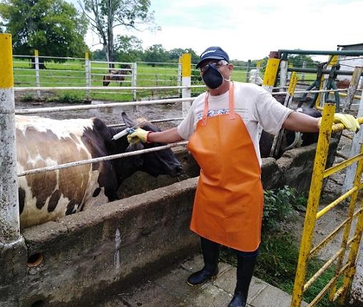 En Primer Ciclo contra la Aftosa se ha logrado inmunizar el 62,8 % del hato bovino colombiano