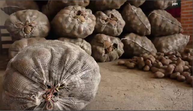 Campesinos de Piedecuesta buscan que la papa pastusa que producen en Santurban sea comprada a través de ANUC, para que no les toque regarlas a las Centrales mayoristas